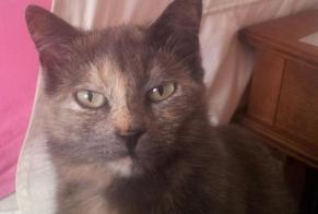 Disappearance alert Cat Female , 6 years Châtellerault France