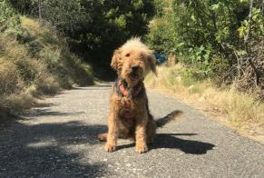 Disappearance alert Dog  Male , 6 years Sampzon France