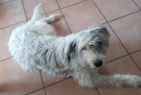 Disappearance alert Dog miscegenation Male , 1 years Grambois France