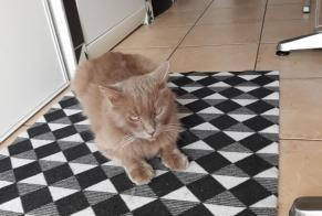 Discovery alert Cat Male Ajaccio France