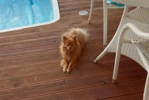 Disappearance alert Dog  Female , 2 years Valras-Plage France