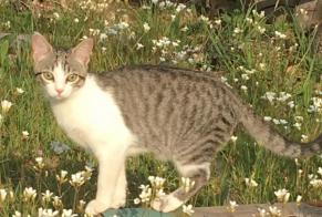Disappearance alert Cat Female , 1 years Roiffieux France