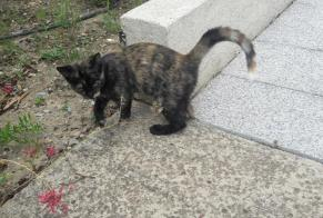 Discovery alert Cat  Female Grabels France
