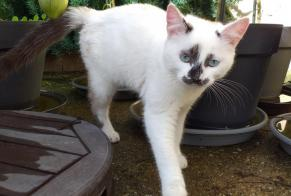 Discovery alert Cat Male Jarny France
