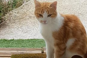 Discovery alert Cat Unknown Plaissan France