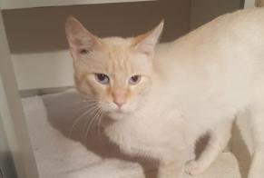Discovery alert Cat Male , 1 year Poitiers France