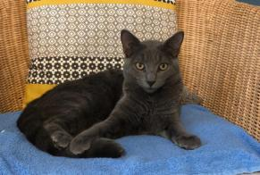 Disappearance alert Cat miscegenation Male , 0 years Quetigny France