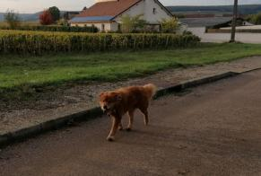 Discovery alert Dog Unknown Chorey-les-Beaune France