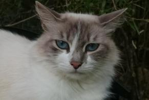 Disappearance alert Cat  Female , 3 years Lecci France
