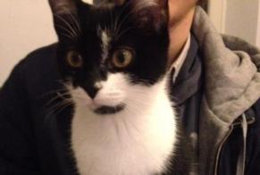 Disappearance alert Cat Female , 3 years Luxeuil-les-Bains France