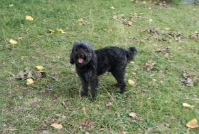 Discovery alert Dog  Male Pont-Sainte-Maxence France