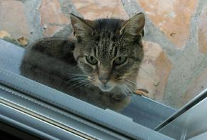 Discovery alert Cat Male Liancourt France