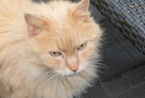 Disappearance alert Cat Male , 14 years Choisy-le-Roi France