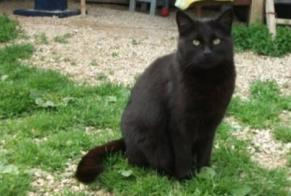 Disappearance alert Cat Female , 8 years Mons-en-Montois France