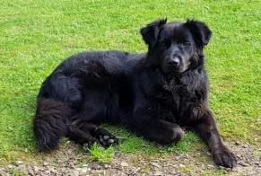 Disappearance alert Dog miscegenation Female , 4 years Pansey France