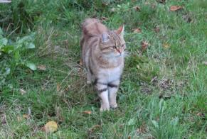 Discovery alert Cat Female Sardent France