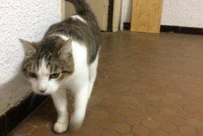 Discovery alert Cat Female Rivesaltes France