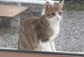 Discovery alert Cat Female La Turballe France
