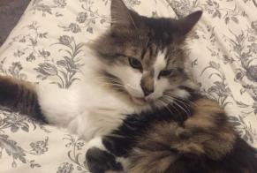 Discovery alert Cat Female , 1 year Amiens France