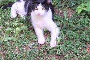 Disappearance alert Cat Female , 1 years Astaillac France