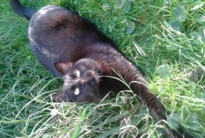 Disappearance alert Cat Male , 10 years Anglet France