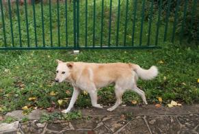Discovery alert Dog Unknown Vitry-sur-Seine France