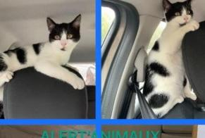 Discovery alert Cat Male Arpajon France
