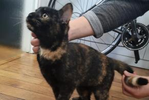 Discovery alert Cat Female Sartilly-Baie-Bocage France