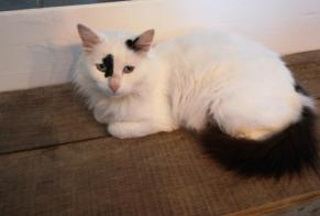 Discovery alert Cat Female , 1 year Nonards France