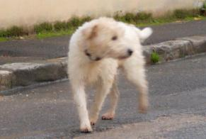 Discovery alert Dog Unknown Le Val-Saint-Germain France