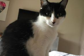 Disappearance alert Cat miscegenation Female , 2 years Epagny Metz-Tessy France