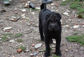 Disappearance alert Dog  Male , 0 years Cissé France