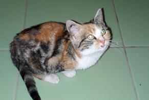 Discovery alert Cat miscegenation Female , Between 4 and 6 months Saint-Laurent France