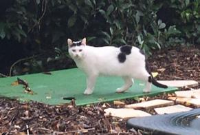 Discovery alert Cat Unknown Bonneuil-sur-Marne France