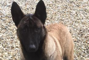 Discovery alert Dog  Female Ploumoguer France