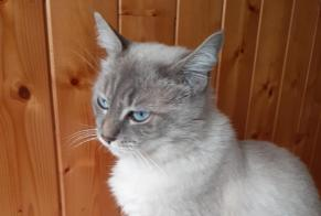 Disappearance alert Cat miscegenation Male , 1 years Morlaix France