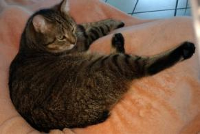Disappearance alert Cat  Female , 6 years Friville-Escarbotin France