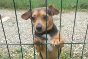 Discovery alert Dog Male Saint-Vrain France