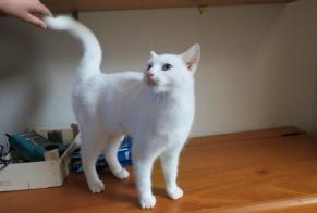 Discovery alert Cat Female Nomain France