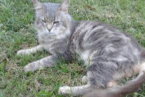 Discovery alert Cat Male Domessin France