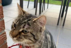 Discovery alert Cat Male Halluin France