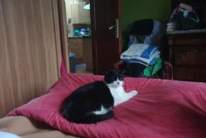Disappearance alert Cat  Male , 2 years Chaumont France