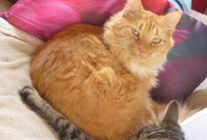 Disappearance alert Cat miscegenation Male , 8 years Mont-Cauvaire France