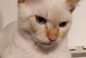Disappearance alert Cat  Male , 0 years Saint-Brevin-les-Pins France