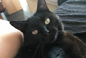 Disappearance alert Cat Male , 6 years Cunlhat France
