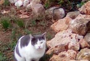 Discovery alert Cat Male , 3 years Vias France