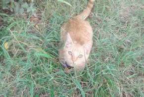 Disappearance alert Cat Male , 0 years Prignac-et-Marcamps France