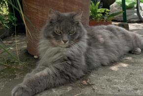Disappearance alert Cat Male , 1 years Angoulême France