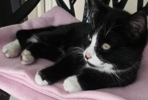 Discovery alert Cat Female , Between 4 and 6 months Saint-Georges-des-Groseillers France