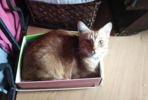 Disappearance alert Cat  Male , 2 years Montpellier France